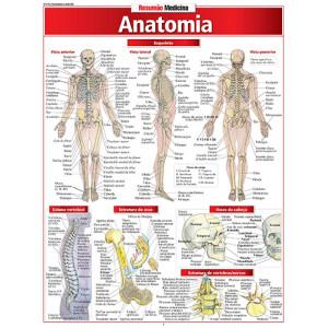 Resumão – Anatomia