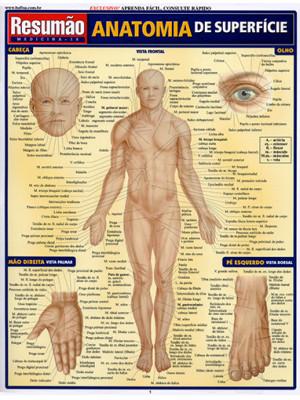 Resumão – Anatomia de Superfície