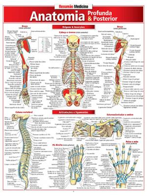 Resumão – Anatomia Profunda & Posterior