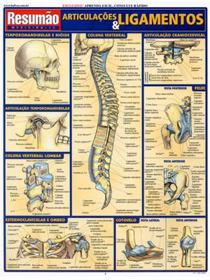 Resumão – Articulações & Ligamentos
