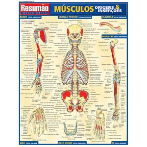 Resumão – Músculos, Origens & Inserções