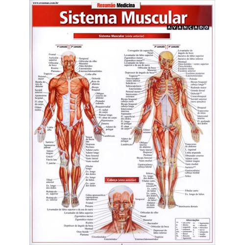 Resumão – Sistema Muscular Avançado