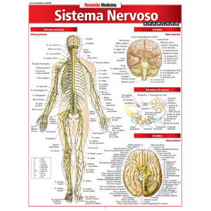 Resumão – Sistema Nervoso Avançado
