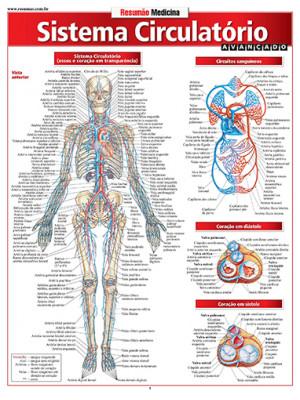 Resumão – Sistema Circulatório Avançado