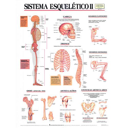 Sistema Esquelético II